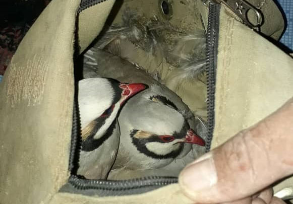 دستگیری شکارچیان متخلف در منطقه حفاظت شده ارژن