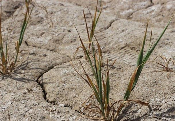 خشکسالی ۱۰۰۰ میلیارد تومان به عشایر فارس خسارت زد