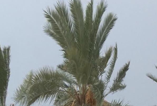 آغاز فعالیت سامانه بارشی در فارس