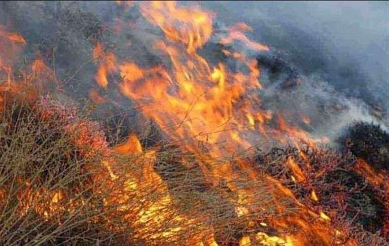 آتش سوزی یکی از باغهای بولوار چمران شیراز