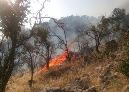 ۳۰ مورد آتش سوزی در منابع طبیعی فارس