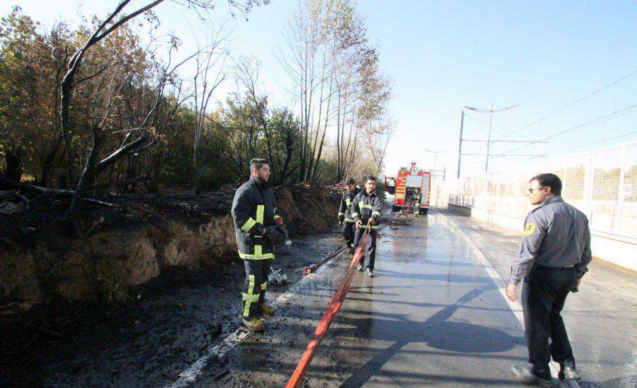 آتش سوزی باعث از بین رفتن ۶۵ درخت در شیراز شد
