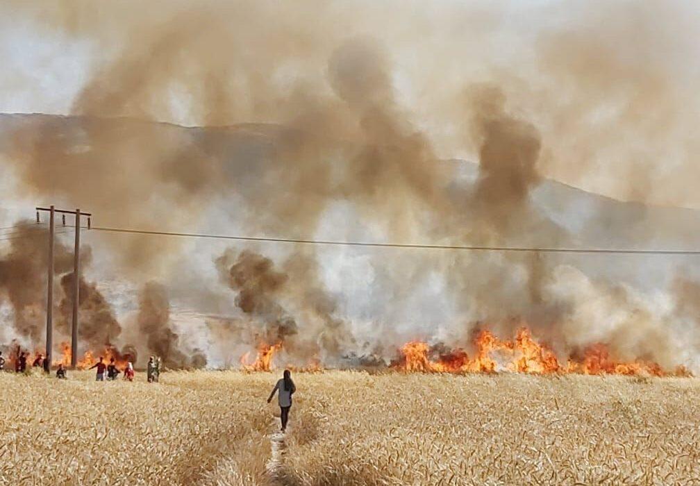 ۱۶۰ هکتار از محصول جو و گندم کازرون در آتش سوخت