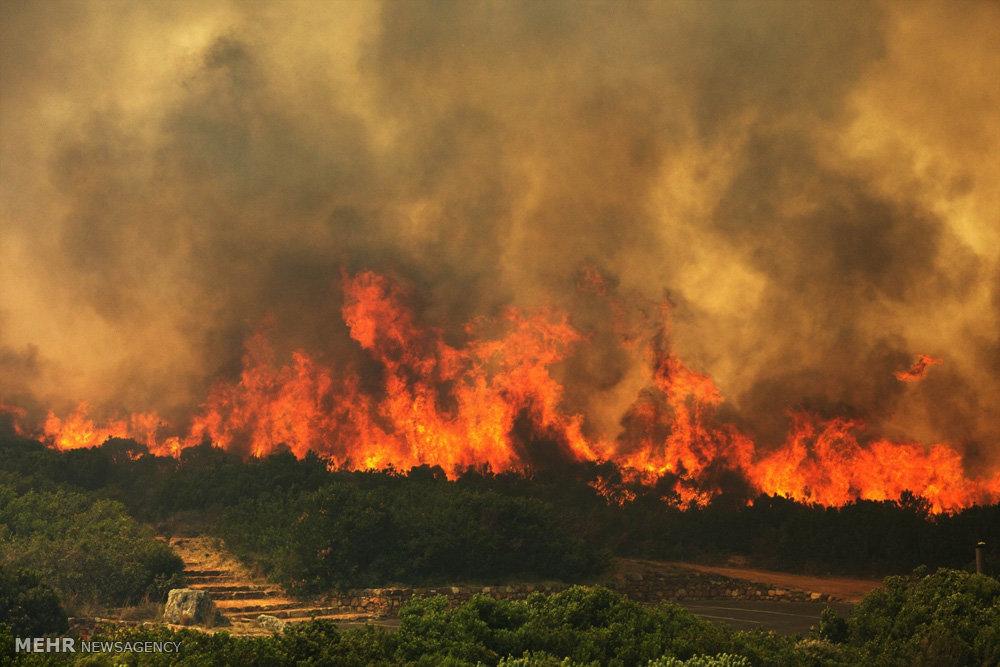 آتشسوزی در منطقه جنگلی «اَبنو» فارس
