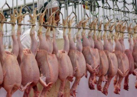 جهاد کشاورزی فارس:۷۰ دلال گوشت مرغ در فارس شناسایی شدند