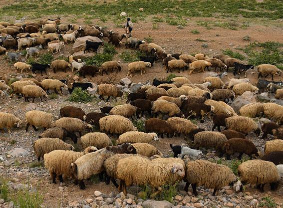 ۲۳ اردیبهشت ۱۴۰۰ برای زمان آغاز کوچ عشایر فارس تعیین شد