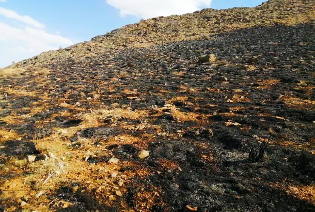 ۱۸۰ هکتار از طبیعت هنگام فارس در آتش نابود شد