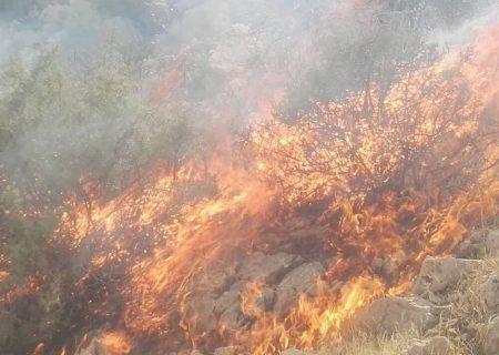 کوه برز فیروزآباد فارس در آتش میسوزد