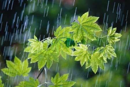 بیشترین بارش تابستانی فارس در استهبان ثبت شد