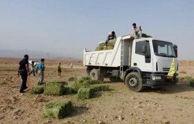 کشاورز سیرجانی یک تن یونجه به حیات وحش بهرام گور فارس اهدا کرد