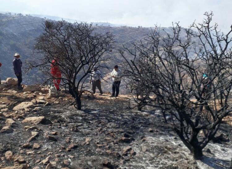 آتش سوزی ارتفاعات ممسنی مهار شد