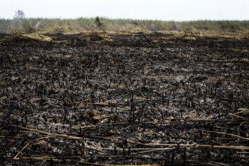 آتشسوزی دور قلات شهرستان نیریز مهار شد