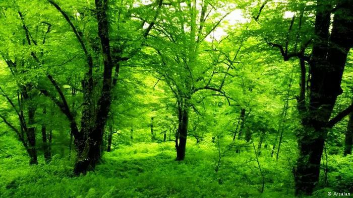 تاثیر جنگلدرمانی بر فشار خون و سلولهای کشنده سرطان