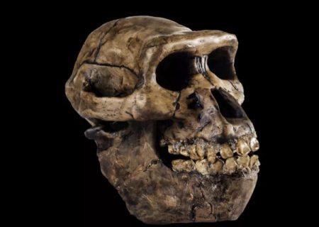 چه تعداد گونه انسان اولیه روی زمین وجود داشته است؟