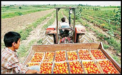 سالانه ۳۰ میلیون تن محصولات کشاورزی در ایران هدر میشود