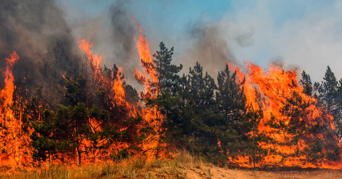 ۲۲۰ آتش سوزی در منابع طبیعی فارس