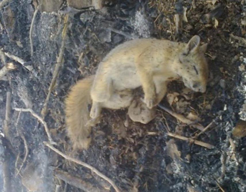 مرگ گونه های جانوری در آتش سوزی کهمره سرخی شیراز و جره و بالاده کازرون