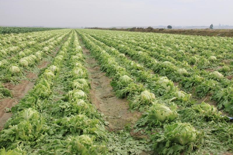 پرداخت خسارت به کشاورزان فارس «تا ۱۰ روز آینده»
