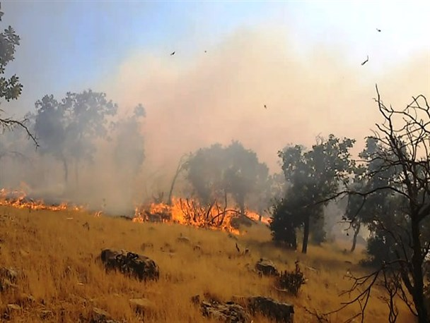 آتشسوزی در مراتع و جنگلهای اطراف کوههای قرداش فراشبند