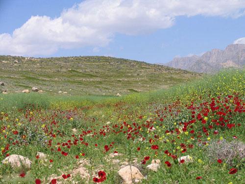 غرب شیراز به منطقه حفاظتشده تبدیل میشود