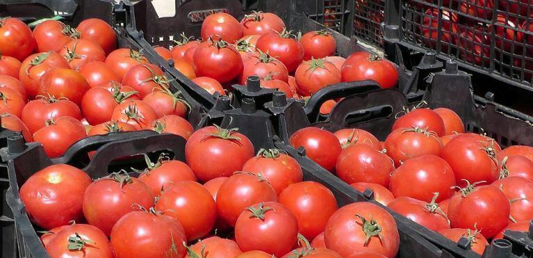 پیش بینی برداشت ۱۳۳ هزار تن گوجهفرنگی در فراشبند