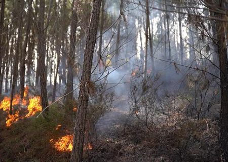 چگونه میتوان با اطلاعات هواشناسی آتشسوزیهای طبیعی را پیشبینی کرد؟