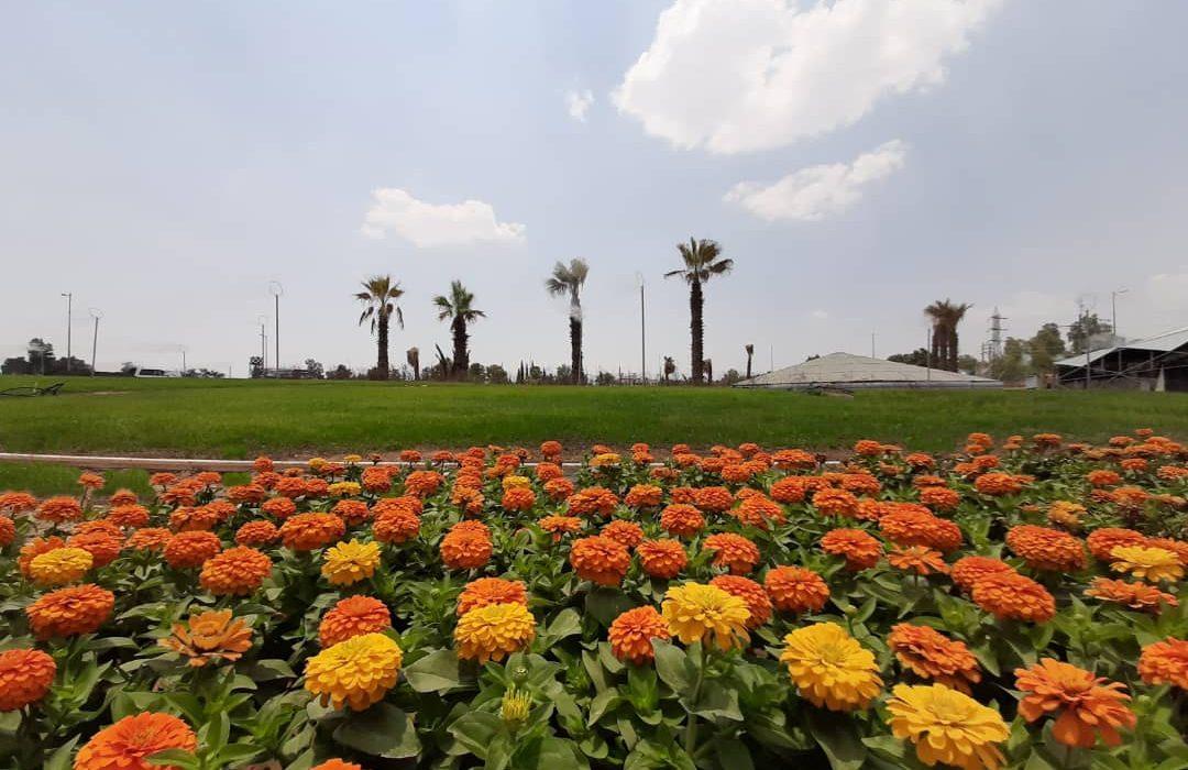 پایان عملیات بهسازی فلکه گل سرخ شیراز