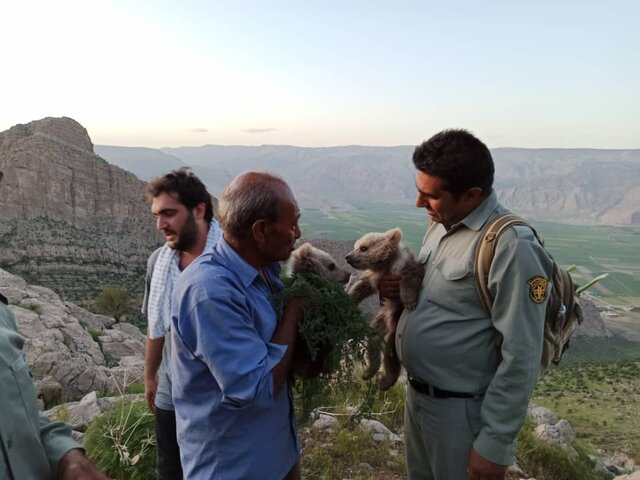 نجات توله خرسهای سرگردان در ارتفاعات کوهخرسی فارس