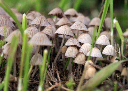چگونه از مسمومیت با قارچ در امان بمانیم؟