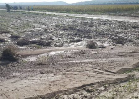 خسارت ۲۲ میلیاردی حوادث طبیعی به کشاورزی فسا