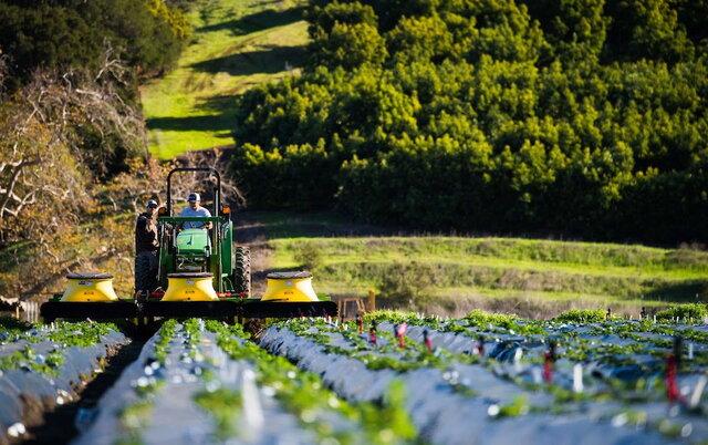 پرداخت ۲۲ هزار میلیارد ریال تسهیلات کشاورزی در فارس