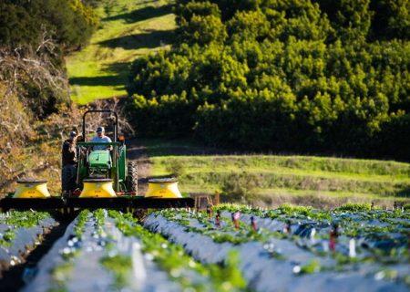 فارس دومین استان در تولیدات زراعی است