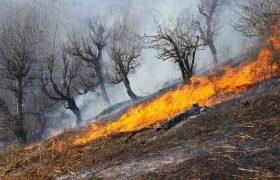 آتش سوزی پارک ملی بمو مهار شد