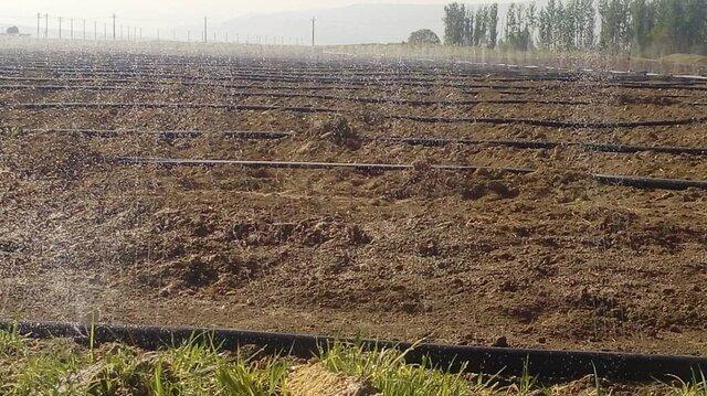افزایش هفت برابری کاشت چغندر قند در شیراز
