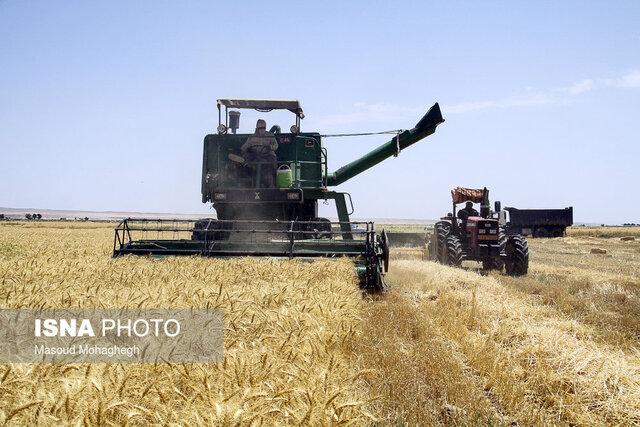 کاهش تولید گندم در شیراز
