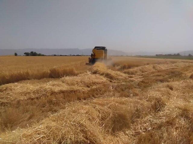 پیشبینی تولید بالغ بر ۲۸۰ هزار تن گندم در مرودشت