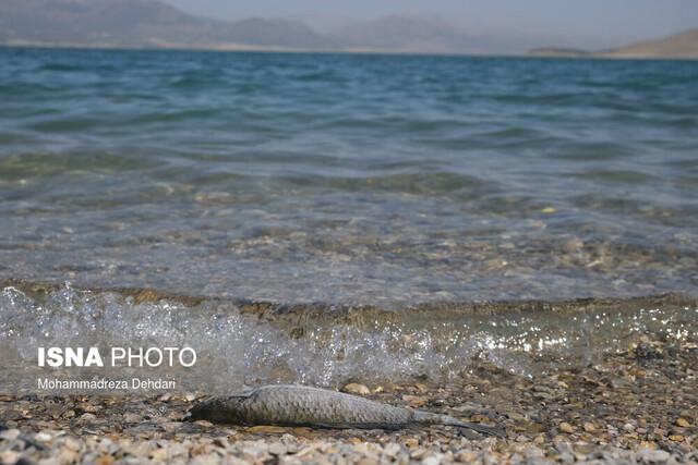سایه خشکسالی بر سر سدهای فارس