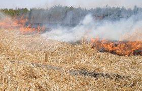 آتشسوزی ۱۴ هکتار مزرعه گندم را خاکستر کرد