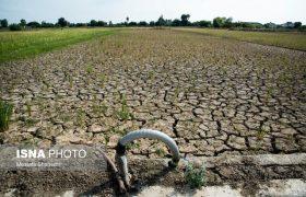 خسارت ۴۱ هزار میلیارد ریالی خشکسالی به کشاورزی فارس