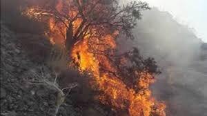 آتش سوزی ممسنی عمدی بود