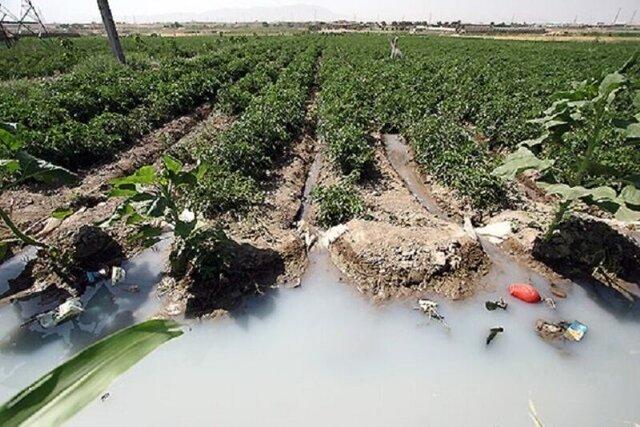برخورد با استفاده کنندگان از فاضلاب در آبیاری مزارع