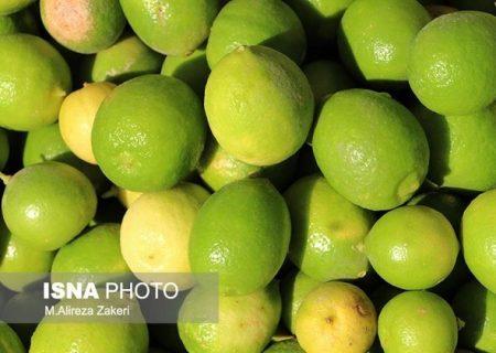 پیشبینی تولید بیش از ۶۰۰ تن لیمو ترش در فسا