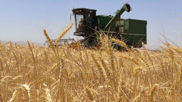 خرید تضمینی گندم در فارس تمام شد