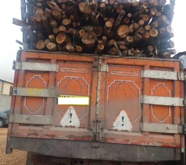 کشف ۱۰ تن چوب قاچاق در جهرم