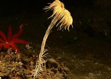 کشف «فسیل زنده» ۲۷۳ میلیون ساله در کف اقیانوس