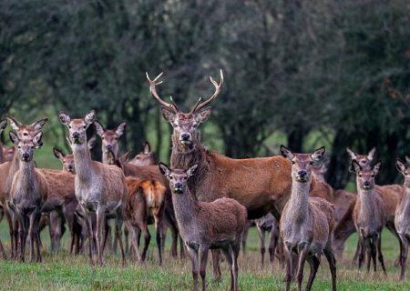 کشتار ۵۴۰ حیوان در جریان یک برنامۀ شکار مردم پرتغال را شوکه کرد