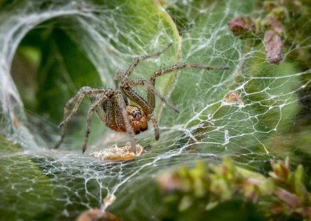تلاش دانشمندان برای «حرف زدن با عنکبوتها»