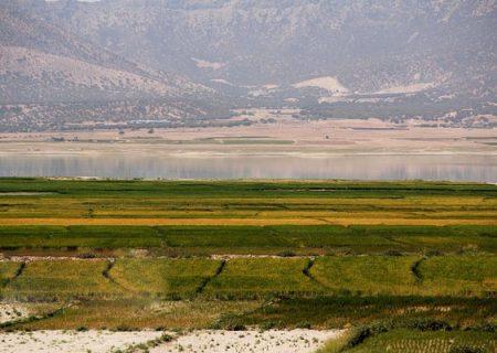 افزایش ۴ برابری کشت برنج در دشتهای ممنوعه فارس