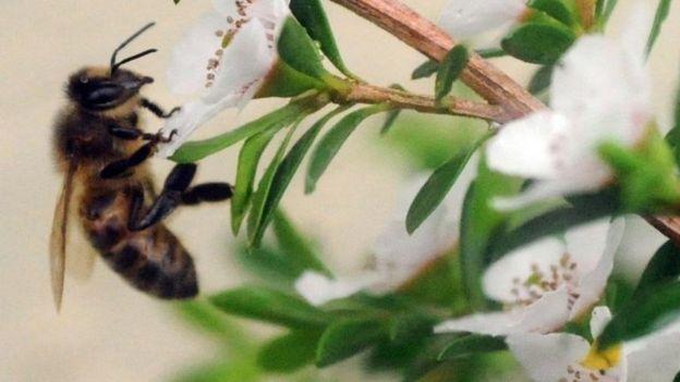کاهش حشرات بالدار «به مرز هشدار رسیده است»
