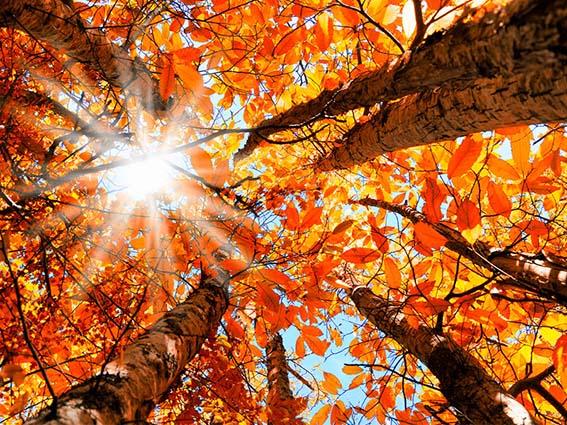 پاییز کم بارش در انتظار فارس